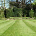 Græsplæne i haven