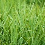 Billigt rullegræs leveret lige til døren
